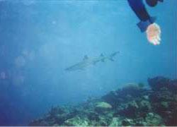 Sharks...